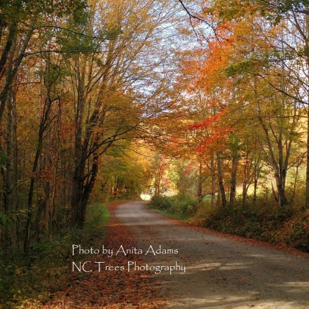 Signed - Max Patch Road in Autumn