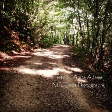 Signed - The Parkway Trail