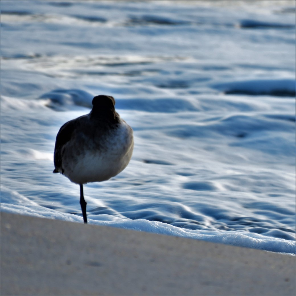 My one legged friend sea bird