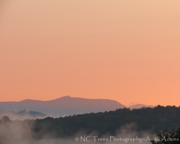 Tangerine skies over the Blue Ridge Mountains of Western North Carolina. Photographer: Anita Adams of NC Trees Photography